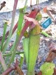 carnivorous plant garden