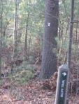 white disk marks warner trail