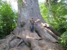 that's a big spruce
