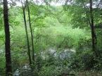 glimpse of pond