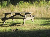 bring a picnic
