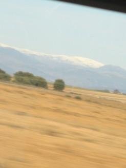 Pyrenees?