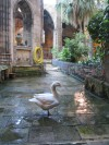 geese in the cloister