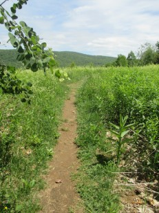 summit meadow trail