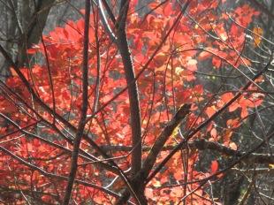 blazing color