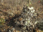rocky tree roots