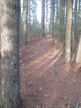 pine needles on trail