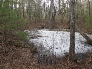 frosty pool