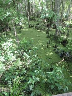 swamp