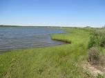 Allen's pond shoreline